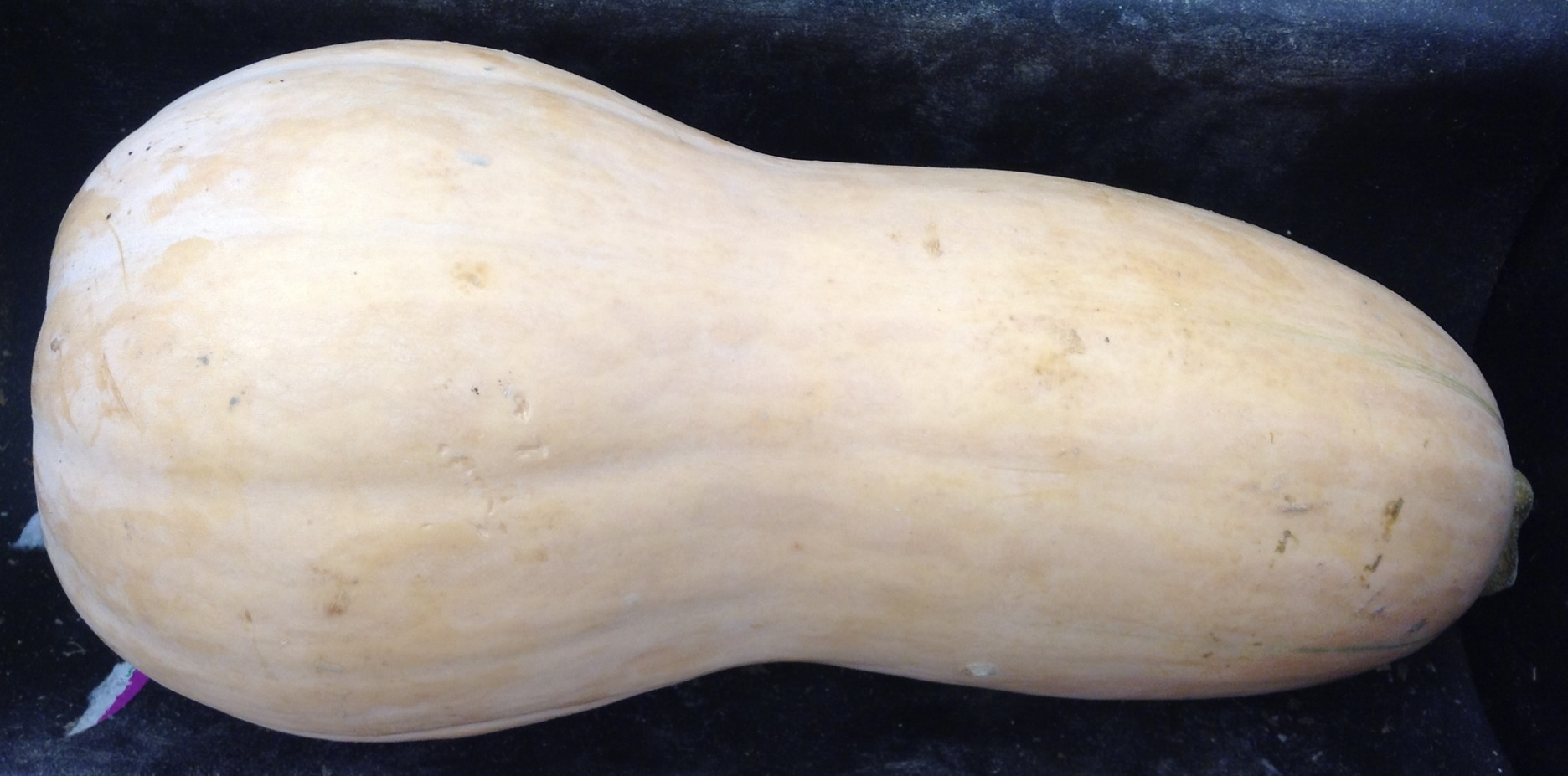 butternut mature singles Latest health & wellbeing news, comment and analysis from the guardian, the world's leading liberal voice.