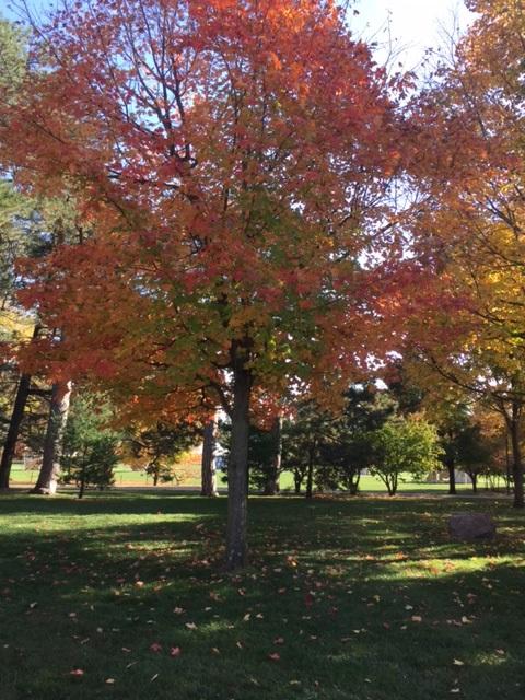 fall-tree1