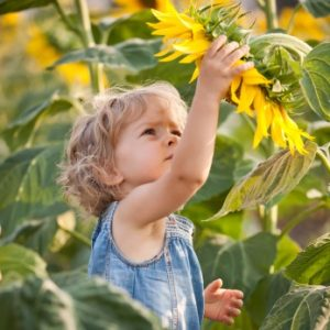 Beautiful child with sunflower in spring field
