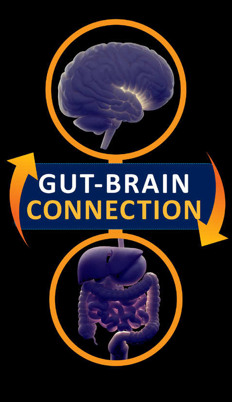 gut-brain connection